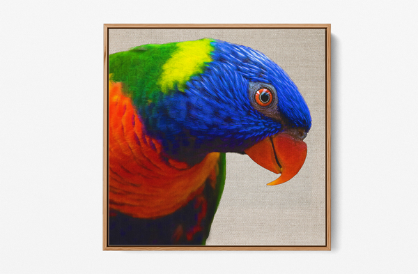 Lorikeet canvas wall art print