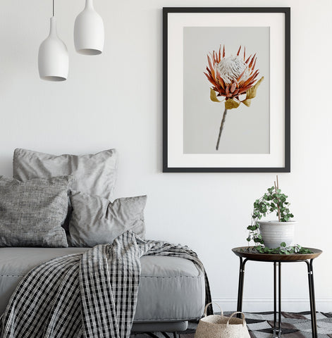 Protea art print canvas wall art