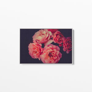 A Twist Of Fate - Navy and Pink Rose Artwork Stretched Canvas Wall Art I Heart Wall Art Australia