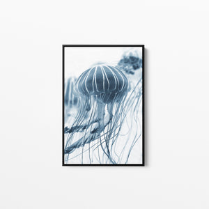 Bluebottle-  Stretched Canvas Wall Art Print Bluebottle jellyfish I Heart Wall Art Australia
