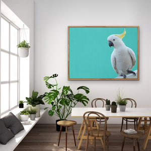 Cockatoo on Turquoise Linen - Framed Canvas Print Wall Art Print I Heart Wall Art Australia