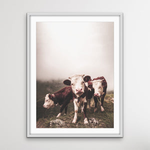 Cows In The Clouds - Brown Photographic Cow Art Print I Heart Wall Art Australia