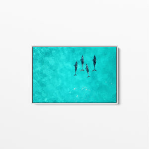 Dolphins - Beach Coastal Art Print Stretched Canvas Wall Art I Heart Wall Art Australia
