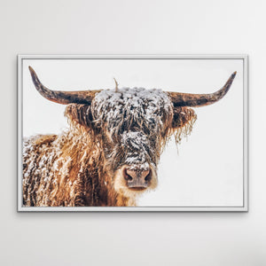 Highland Cow In The Snow - Canvas and Paper Photographic Wall Art Print I Heart Wall Art Australia
