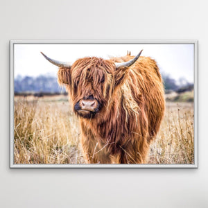 Highlander -Highland Cow Stretched Canvas Wall Art Print Cheap Wall Art Australia