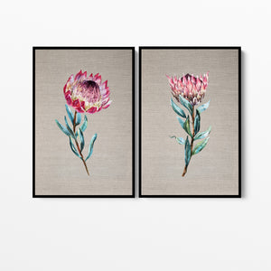 Protea Pair - Two Piece Stretched Canvas Australian Wildlife Framed Wall Art I Heart Wall Art Australia