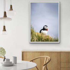 Puffin But Love - Puffin Photographic Stretched Canvas Wall Art Print I Heart Wall Art Australia