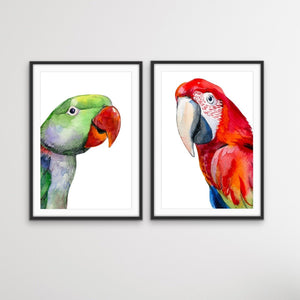Red and Green Parrots - Watercolour Artwork Print Set of Red and Green Parrots I Heart Wall Art Australia