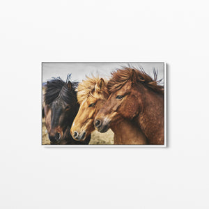 Three Horses Wild Horses Stretched Canvas Wall Art Print Cheap Wall Art Australia