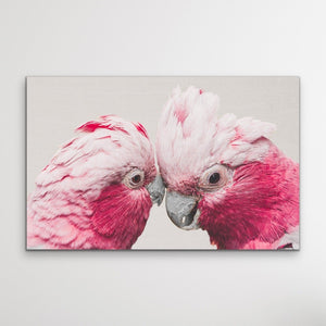 Two Gossiping Galahs -  Original Australian Pink Cockatoo Galah Nature Painting Stretched Canvas Wall Art Print I Heart Wall Art Australia