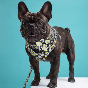 Beautiful French Bulldog Harness Leash And Collar Set