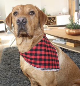 Red and Green Check Bandana Pair - Waggy Ways