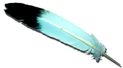 Feathers - Eagle Wing 4 Pk