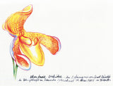 MNEPRT005 - Phantasie Orchidee