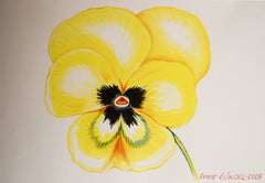 "PRT229 - ""Yellow Pansy"" - Framed Art Print By Artist Ernst Zundel Collectible"