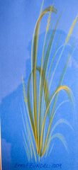 "PRT218 - ""Summer Wheat in Blue II"" - Framed Art Print By Artist Ernst Zundel Collectible"