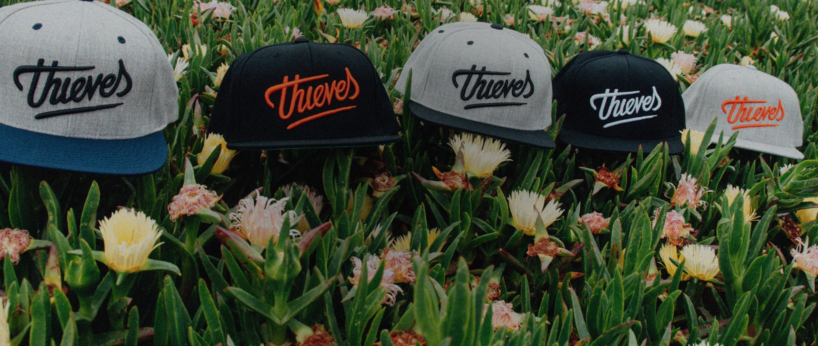 Thieves Co. Santa Cruz, California