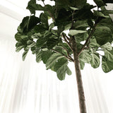 Faux Giant Fiddle Leaf Fig H2700mm