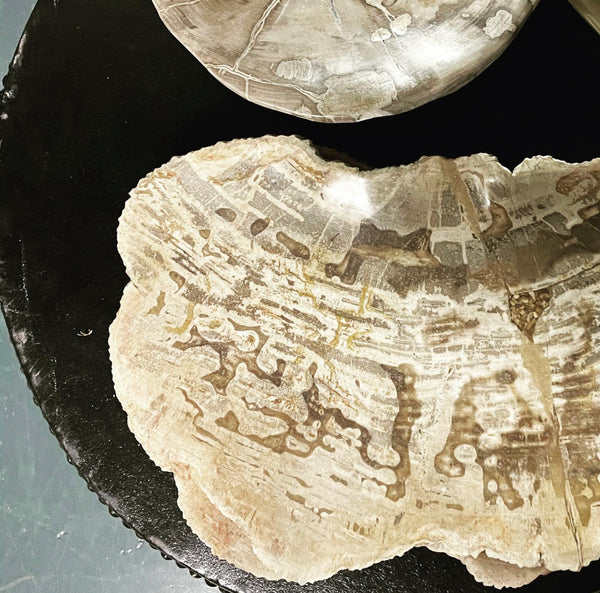 Fossilised Serving Plates