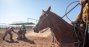 Branding and Ranching in Quarantine