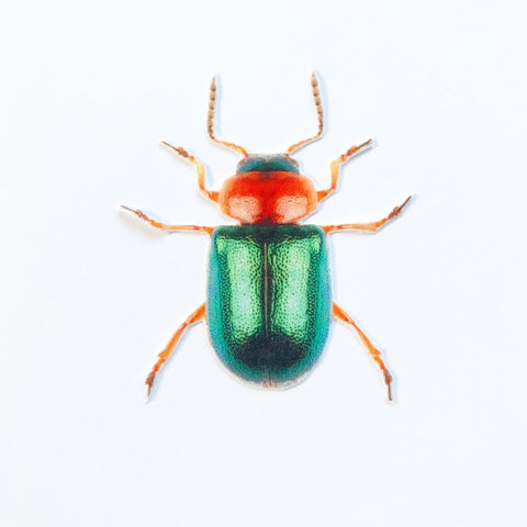 Orange and Green Beetle Appliqué