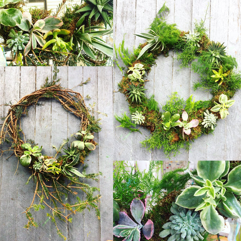 Living Succulent Wreaths