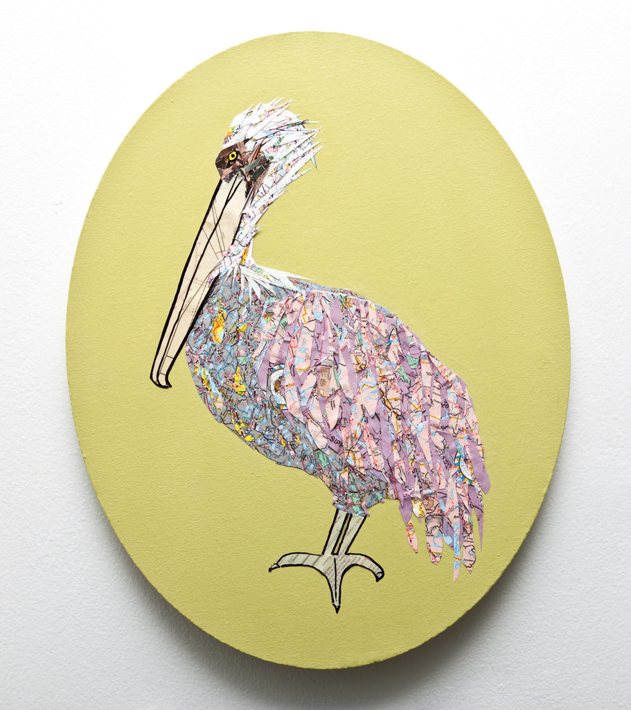 Louisiana Pelican