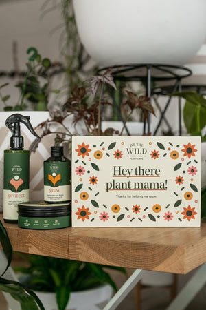 We the Wild Plant Lover Essential Care Kit