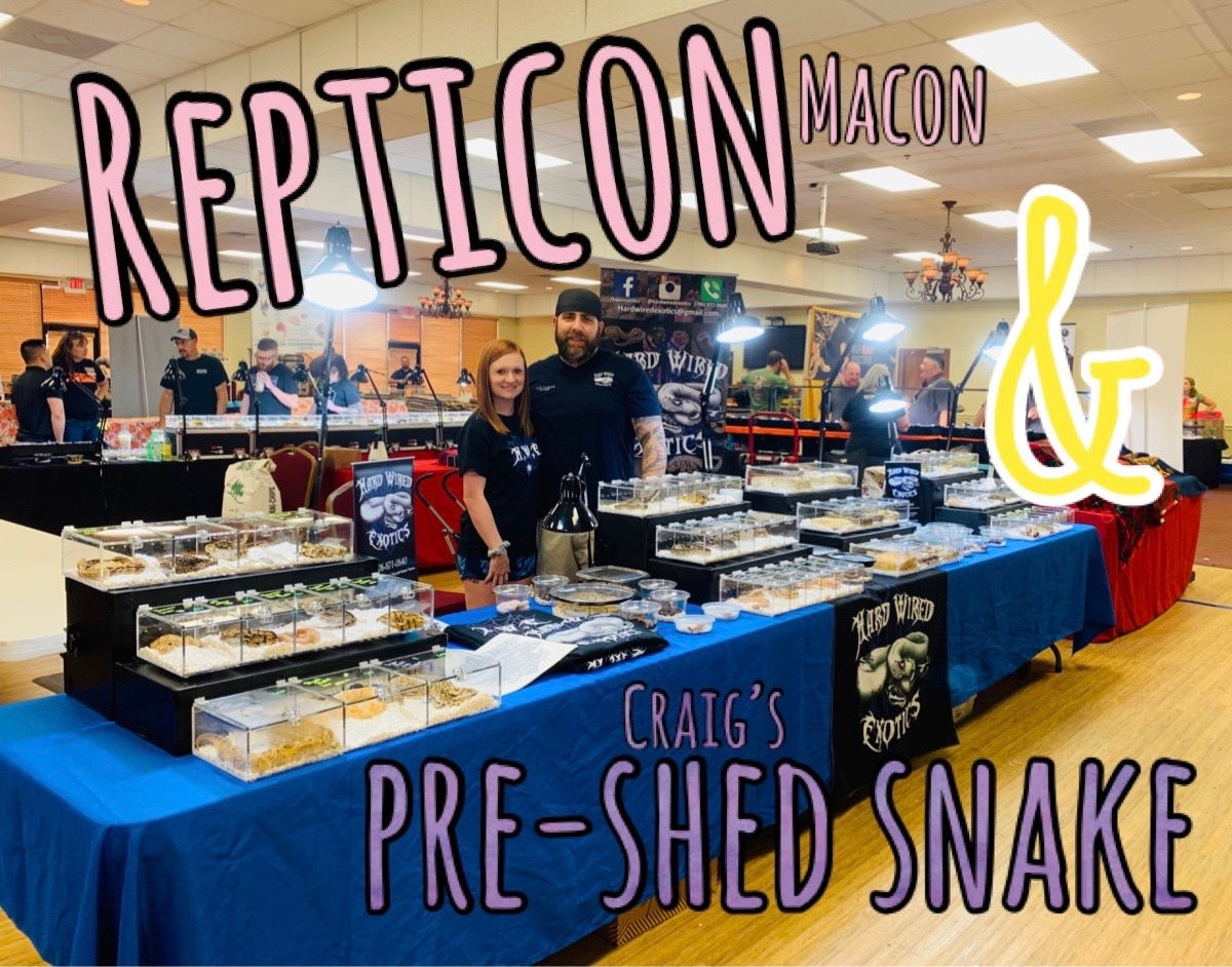 Repticon Macon & Craig picks out a snake pre-shed