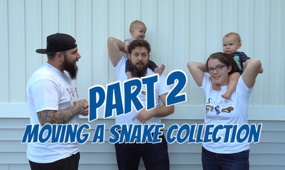Moving a snake collection part 2!!
