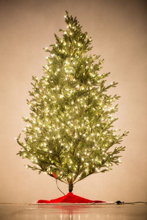 "Holiday Bright Lights 8.5' ""Fresh Cut"" Tree Medium"