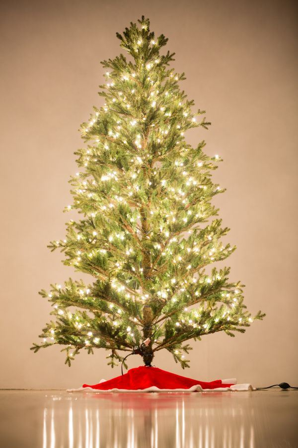 Holiday Bright Lights 7.5' Baby Pine Full