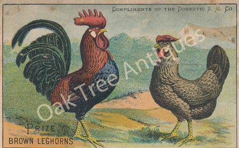 Victorian Trade Card - Prize Brown Leghorns - No. 4 Family - Domestic Sewing Machines