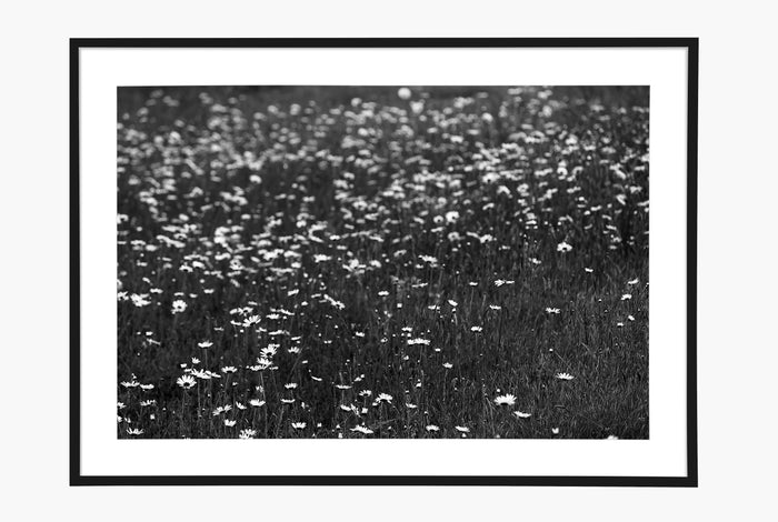 Las Flores - Black and White