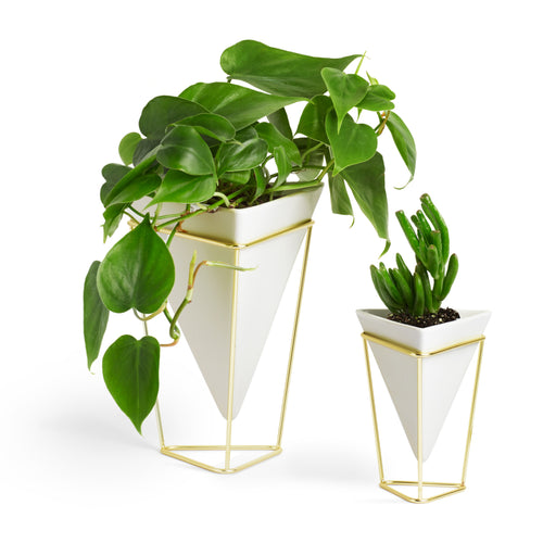 Tabletop Planters | color: White-Brass