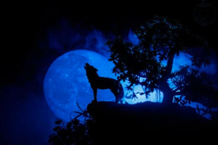 Wolf Howling at Full Moon Image