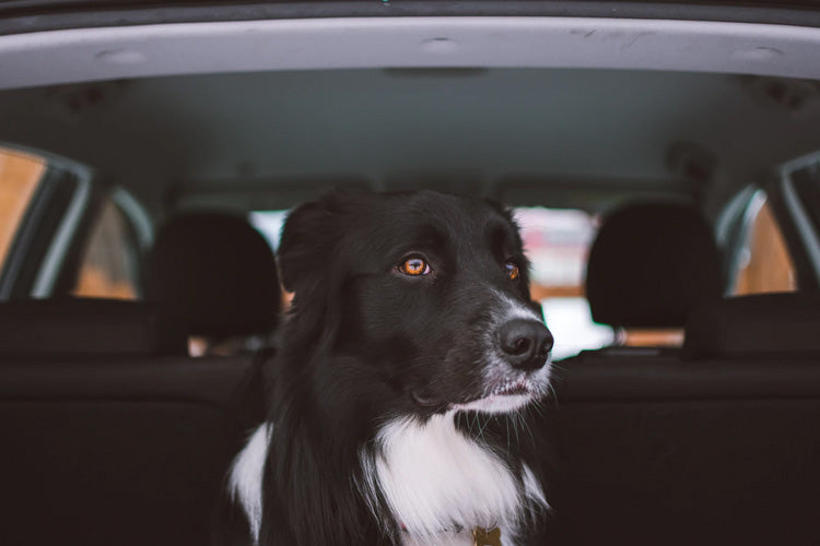 How To Road-Trip Safely With Your Dog