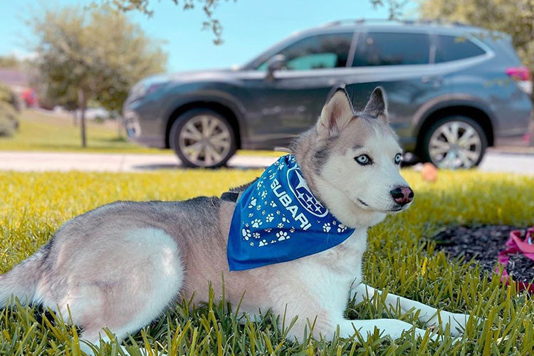 5 Ways To Make Your Car More Pet-Friendly