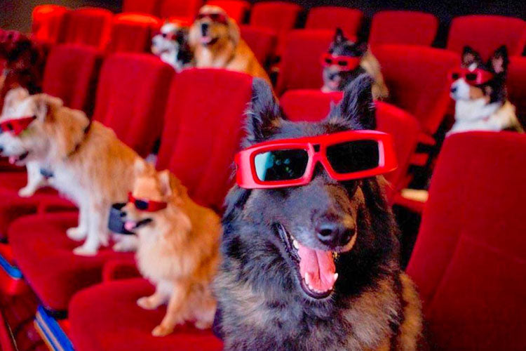 Canine Companions In Movie Theaters