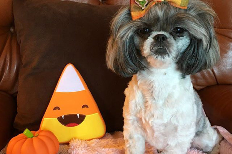 7 Ways to Keep Your Dogs Safe This Halloween