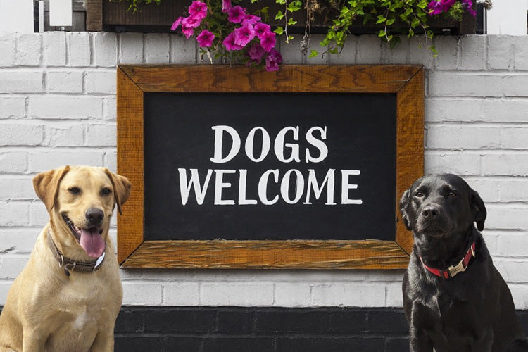 Not Pet-Friendly, Yet? Start Here