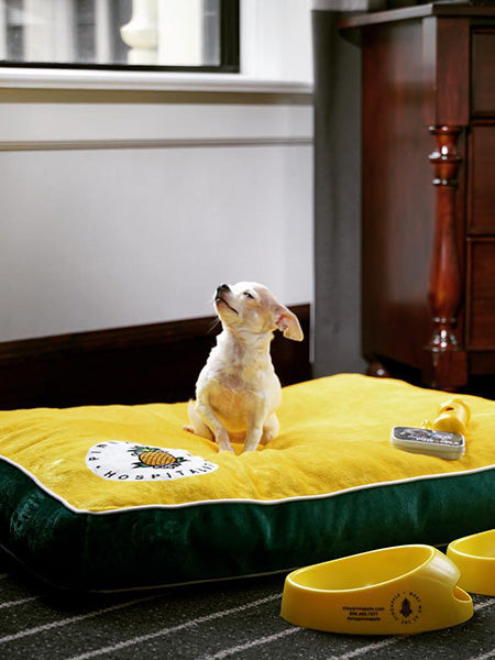 Customizable Dog Beds: Sit. Stay. Snooze.