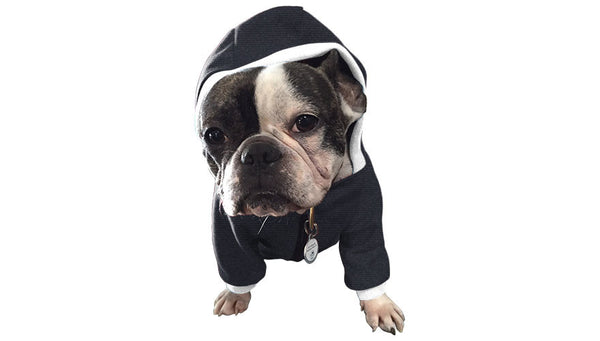 Classy Canine Hoodie