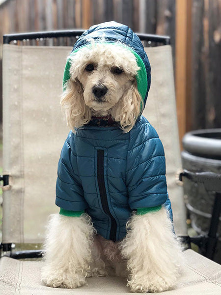 Bark in the Parka