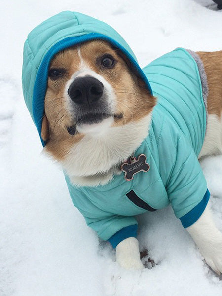 Bark in the Parka: Customizable Dog Winter Coats