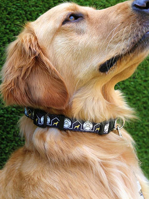 The Customizable Dog Collar Collection