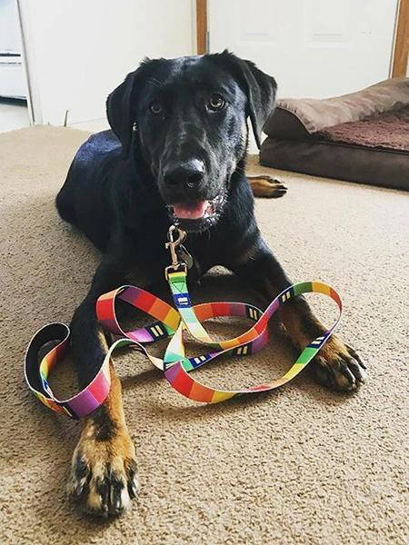 rainbow color dog collar leash