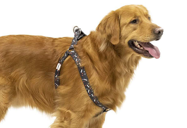 Step In Dog Harnesses For Safer Walks