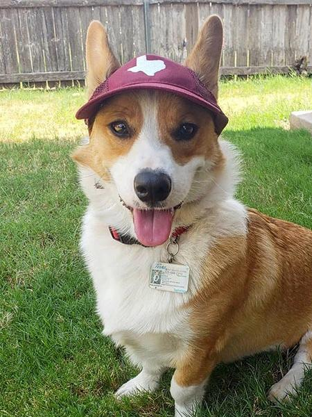 The Official Canine Cap