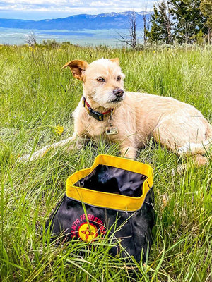 The Eco Friendly Travel Dog Bowls